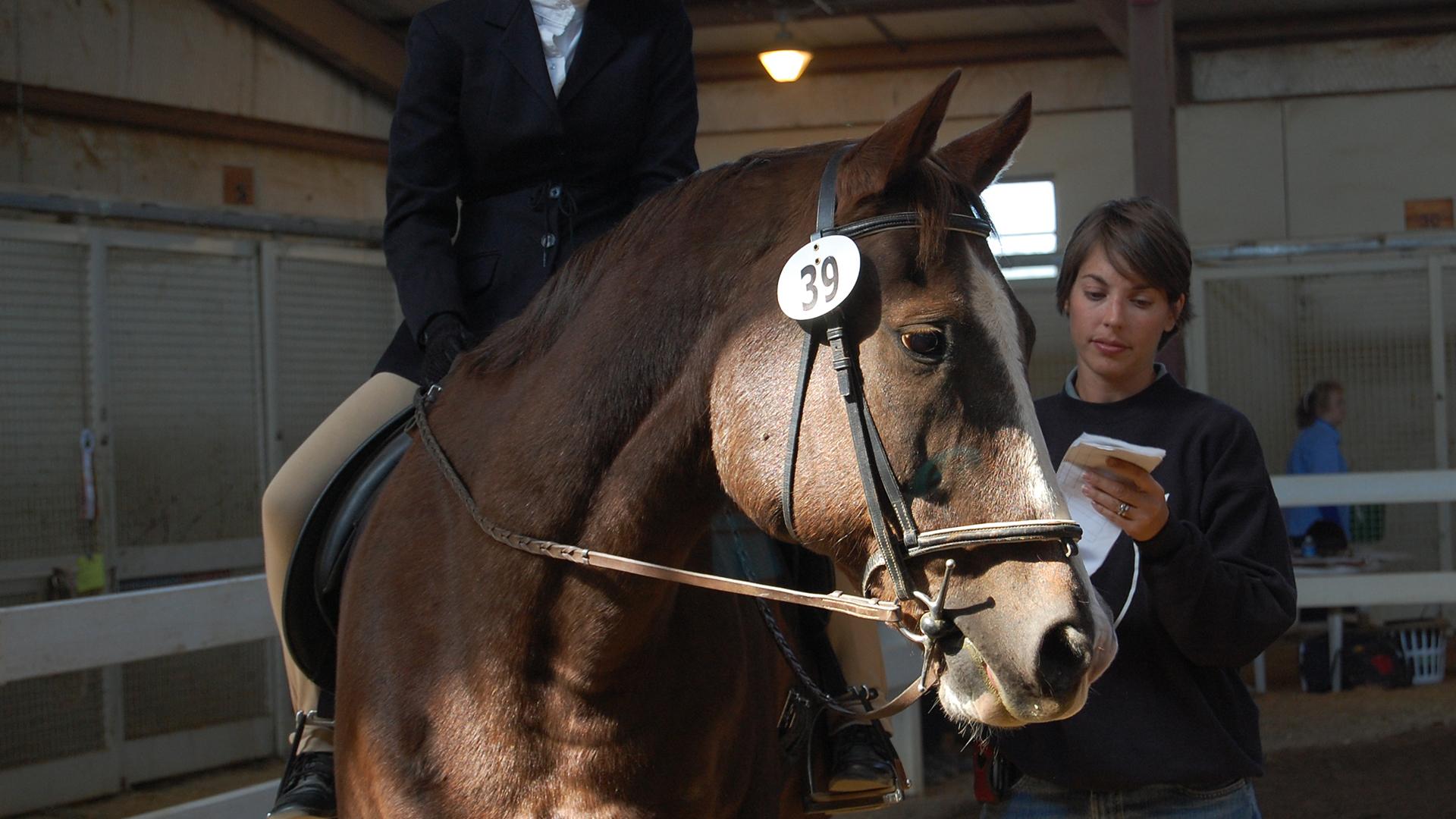 horse show horse